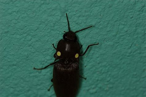 light up bug awesome light up bug found crawling into our cabina he