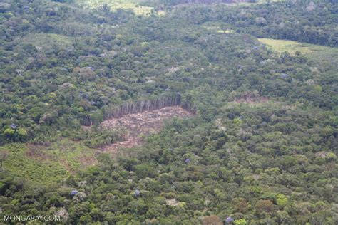 aerial view  sections  rain forest felled