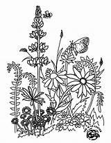 Jamboree Wildflower Paintable sketch template