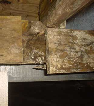 mold prevention dust mite removal greater toronto