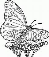 Coloring Butterfly Template Pages Printable Comments sketch template