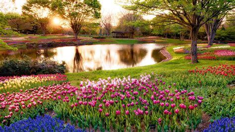 1920x1080 beautiful tulips garden japan tokyo morning beautiful tulips garden hd wallpaper 9006