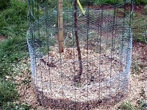Protection Arbres Fruitiers : fertilisation bio des arbres fruitiers p riode engrais ~ Premium-room.com Idées de Décoration