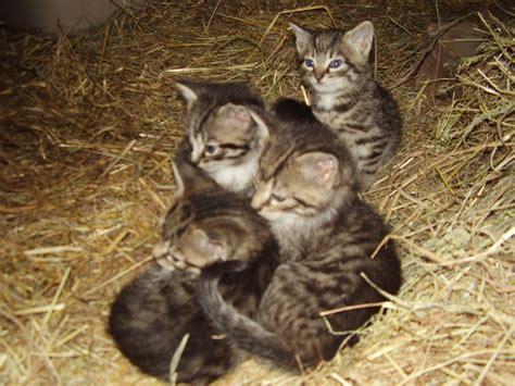 Zu Verschenken by Tieranzeigen Verschenken Kleinanzeigen