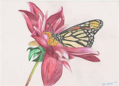 Flowers And Butterflies Drawing At Getdrawings.com