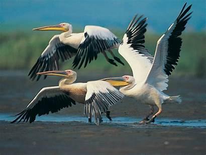 Wild Birds Amazing Desktop Wallpapers Zone