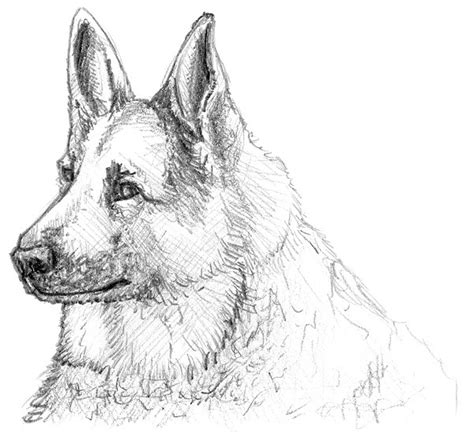 einen hund malen und zeichnen