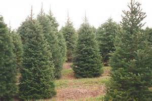 about evergreen valley christmas tree farm evergreen valley christmas tree farm cut your own