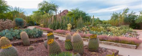 desert botanical garden desert botanical garden