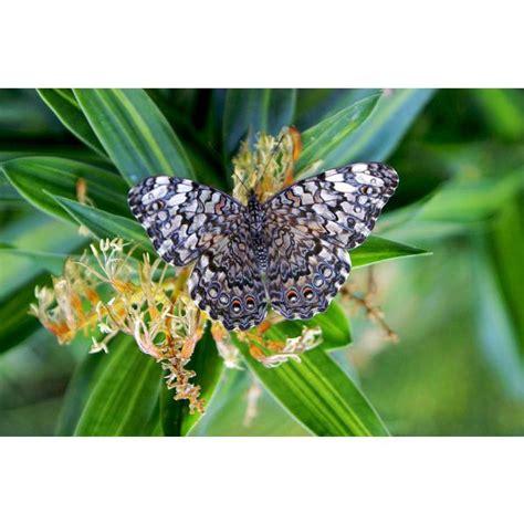 cuisine copenhague maison du monde avis les jardins des papillons hunawihr 28 images le jardin