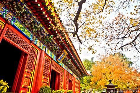 places   fall foliage  beijing china highlights