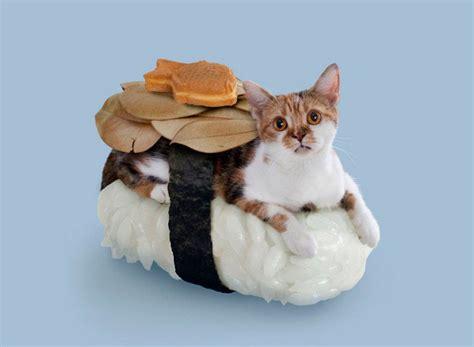 bizarre sushi roll cats  hilarious