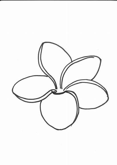 Outline Flower Tattoo Frangipani Drawings Plumeria Flowers