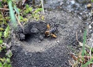 Was Machen Wespen Im Winter : was machen bienen im winter bienen honigtropfen ~ Lizthompson.info Haus und Dekorationen