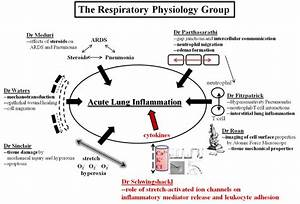 Respiratory Physiology Group