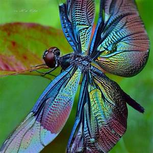Dragonfly #insect #animal | Science | Pinterest | Follow ...