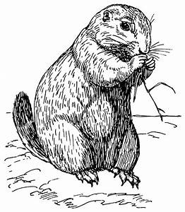 File:Prairie dog (PSF).png - Wikimedia Commons