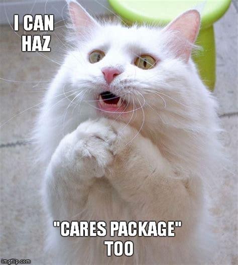I Can Haz Meme Generator - kitteh wants quot nip quot too imgflip