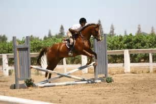 Chestnut Quarter Horse Jumping