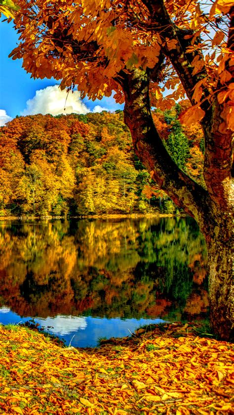 Beautiful Fall Leaves Iphone Wallpaper by Autumn Trees Iphone Wallpaper Hd