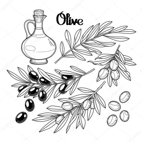 Coloring Oleo by Collection Graphique D Olivier Image Vectorielle
