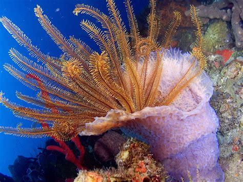 dominica caribbean wildlife marine explore active
