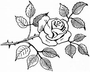 Easy Rose Drawings In Black And White | Bouquet Idea
