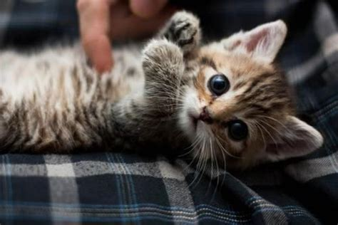 adorable kitten pictures   images  facebook