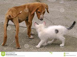 Skinny Dog And White Cat Royalty Free Stock Photography ...