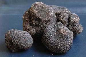 Truffle Species