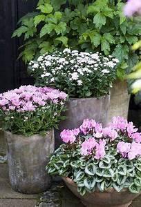 Herbstblumen Garten Winterhart : pin von bettina kogler auf terrasse pinterest ~ Frokenaadalensverden.com Haus und Dekorationen
