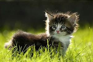 Bacterial Kidney Infection In Cats