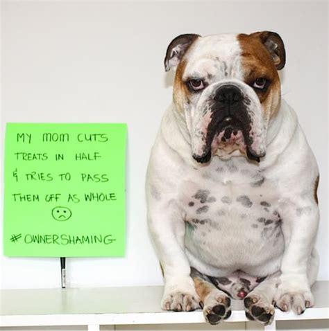 bulldogs     ownershaming  smelt