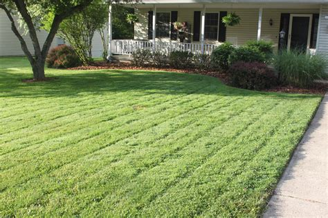 Tips To A Great Lawn-without Chemicals!-old World