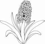Coloring Peony Printable Smart Flower Adults Getcolorings Colorings sketch template