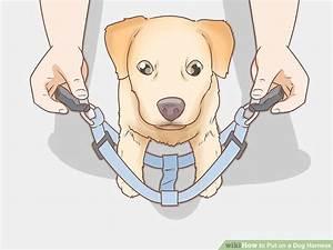 3 Ways To Put On A Dog Harness