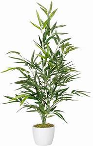 Bambus Als Zimmerpflanze : k nstliche zimmerpflanze bambus ca 70 cm 274 bl online kaufen otto ~ Eleganceandgraceweddings.com Haus und Dekorationen