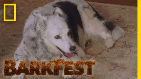 PetSafe Dog Trainer