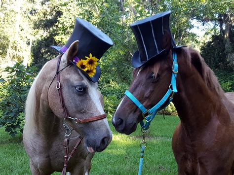 coachman top hat  horses foam equine formal hat