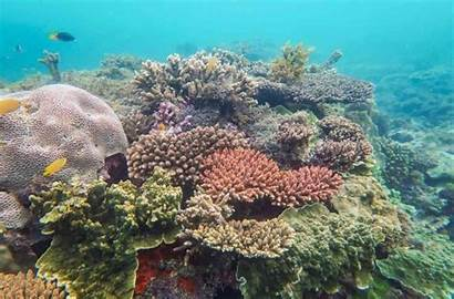 Magnetic Island Snorkeling Queensland Snorkel