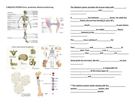 human anatomy  physiology fill  blanks worksheets