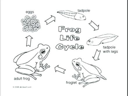 Cycle Of A Frog Coloring Page Pumpkin Cycle Coloring Page Charming Cycle Of A