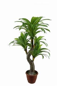 China Artficial Dracaena Tree/Emulated Dracaena Plants