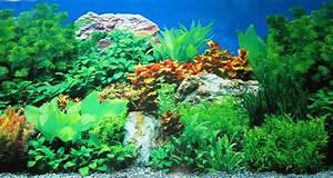 Aquarium Background Decoration Plants Rocks Freshwater 48 ...