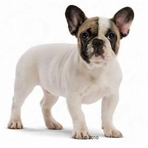 Royal Canin Bulldog : royal canin french bulldog junior great deals at ~ Frokenaadalensverden.com Haus und Dekorationen