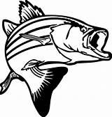 Clipart Trout Fish Splash Coloring Bass Transparent Webstockreview Panda sketch template