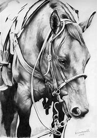 Quarter Horse Head Drawing