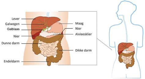 bacterie in maag symptomen