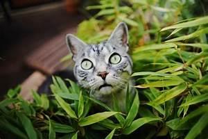 Welche Pflanzen Sind Für Hunde Giftig : welche zimmerpflanzen sind eigentlich giftig f r haustiere pawshake blog ~ Watch28wear.com Haus und Dekorationen