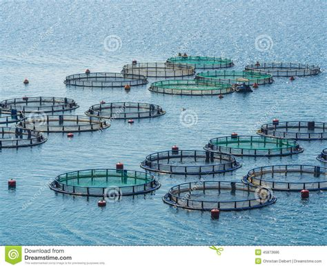 fish farming stock photo image